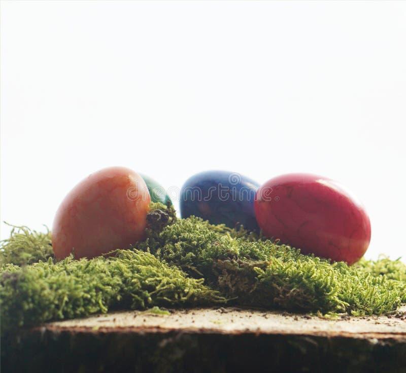 Wielkanocni jajka i zieleni muczenia przy drewnianym blokiem zdjęcie royalty free
