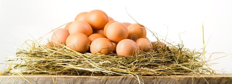 Wielkanocni jajka w gniazdeczku na nieociosanych drewnianych deskach. Biały tło obraz royalty free