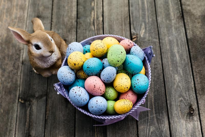 Wielkanocni jajka z królikiem na drewnianym tle w wiosna czasie obraz royalty free