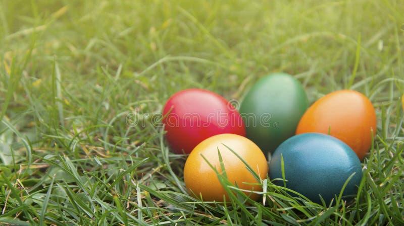 Wielkanocni kolorowi jajka w świeżej zielonej trawie Wiosna, easte wakacyjny tło z kopii przestrzenią zdjęcia stock