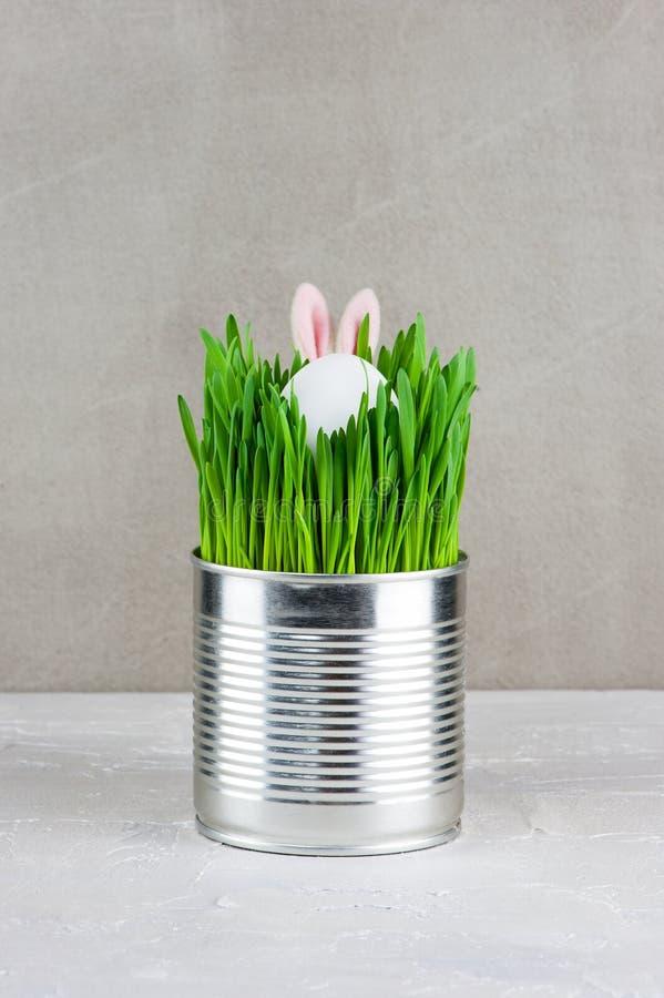 Wielkanocny śmieszny wizerunek: metalu garnek z zieloną trawą, chującym jajkiem i b, zdjęcie stock