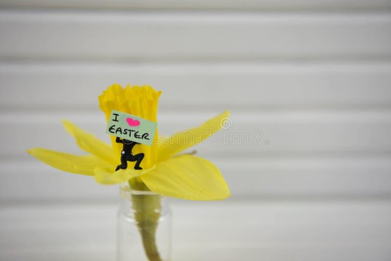 Wielkanocny czasu tekst na miniaturowym podpisuje wewnątrz żółtego daffodil kwiatu zdjęcie stock