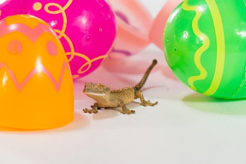 Wielkanocny gekon zdjęcie royalty free
