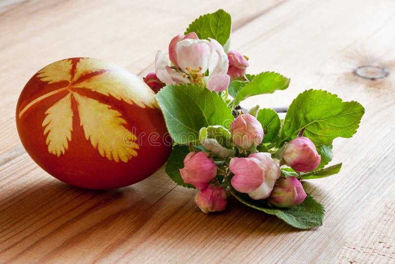 Wielkanocny jajko farbujący z cebul łupami z wzorem świezi ziele, obraz stock