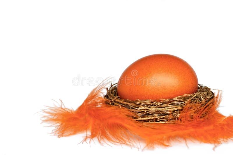 Wielkanocny jajko w gniazdeczku z piórkami odizolowywającymi na białym tle fotografia stock