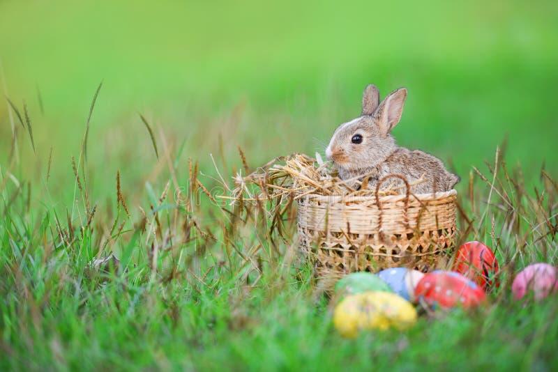 Wielkanocny królik i Wielkanocni jajka na zielonej trawie plenerowej, brązu królika siedzącym koszu/Trochę fotografia royalty free