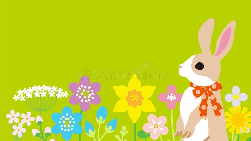 Wielkanocny królik w wiosna kwiatu łóżku - zielonego koloru tło, kopia układu astronautyczny projekt obrazy royalty free
