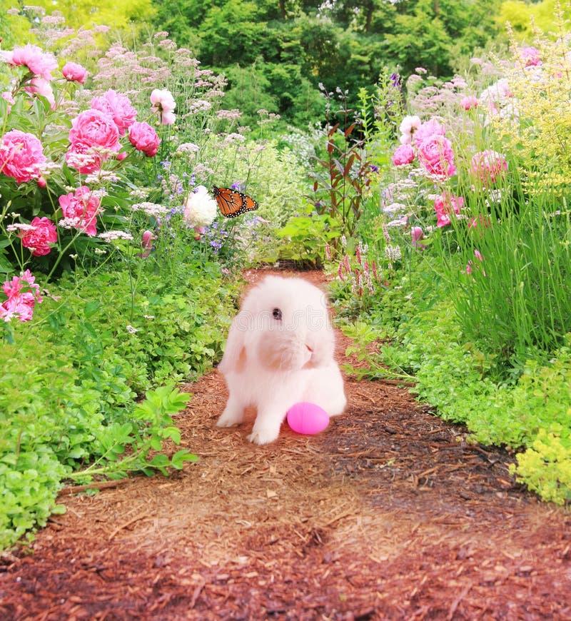 Wielkanocny królik w ogródzie obraz royalty free