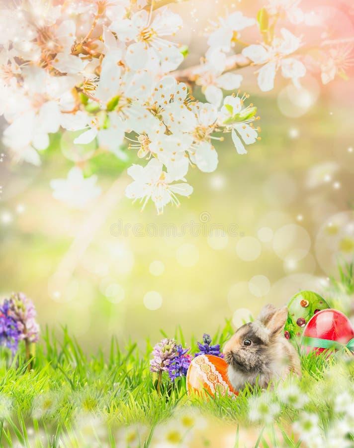 Wielkanocny królik w wiosna ogródzie z okwitnięciem i Easter jajkami zdjęcie stock