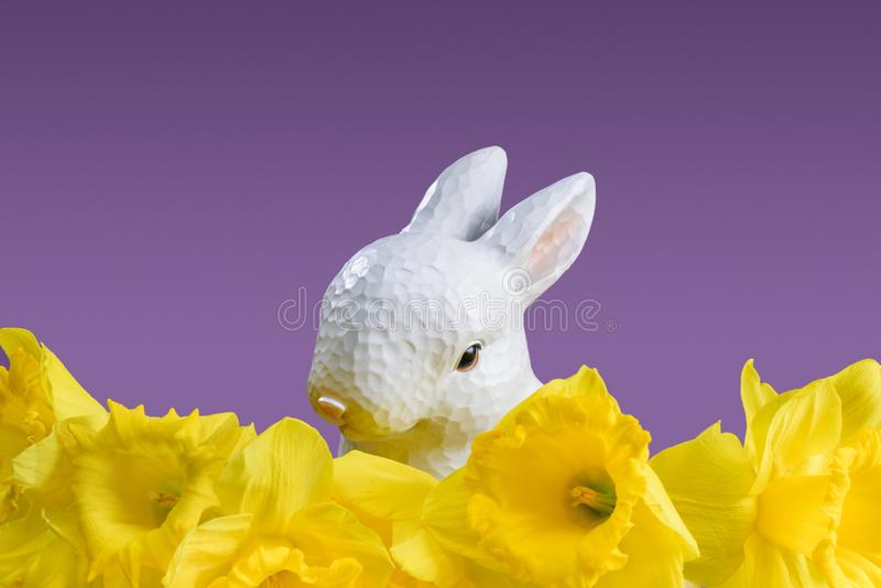 Wielkanocny królik z żółtymi daffodils fotografia royalty free