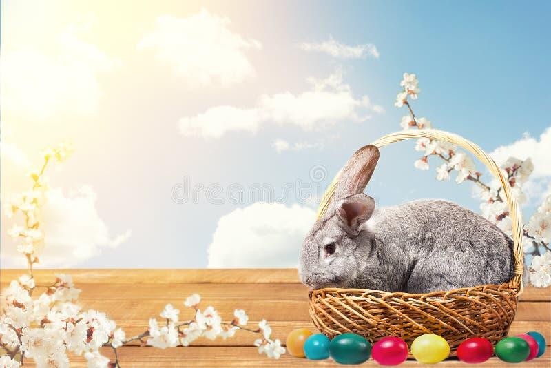 Wielkanocny królik z jajkami w koszu zdjęcie royalty free