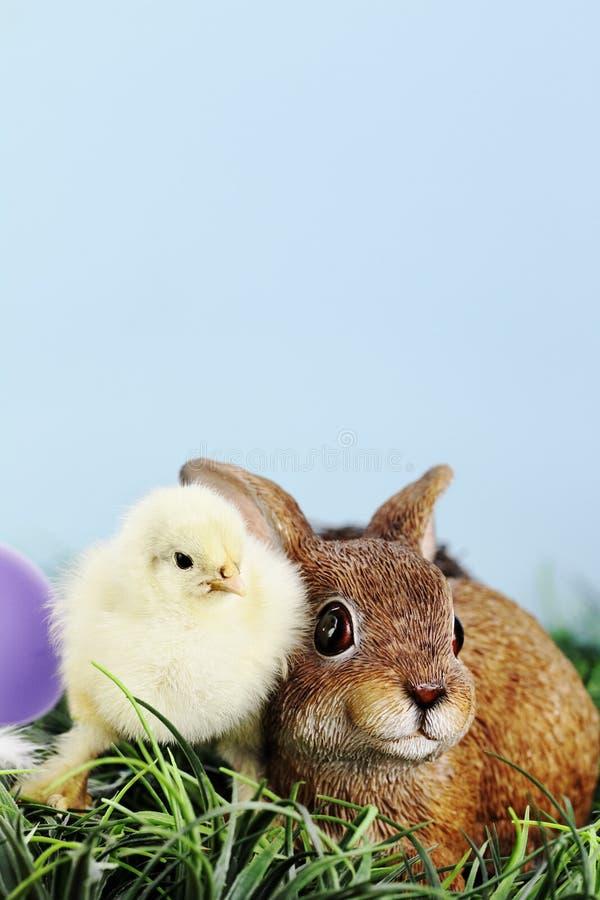 Wielkanocny kurczątko i Bunnie obraz royalty free