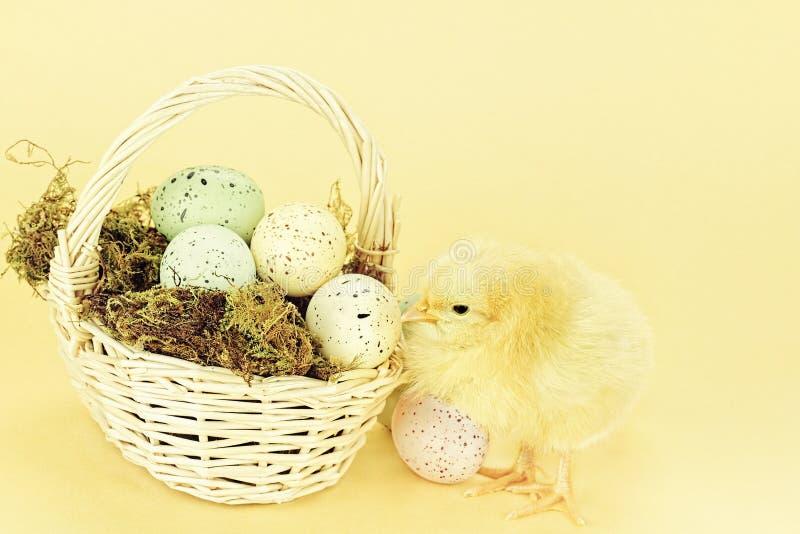 Wielkanocny kurczątko i jajka zdjęcia royalty free