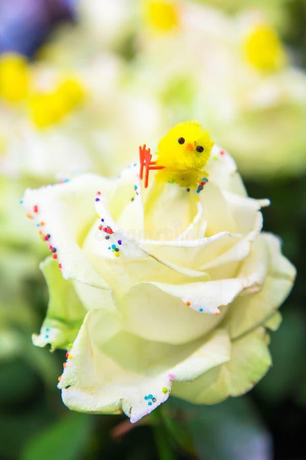 Wielkanocny kurczątko siedzi na białym róża kwiacie obraz royalty free