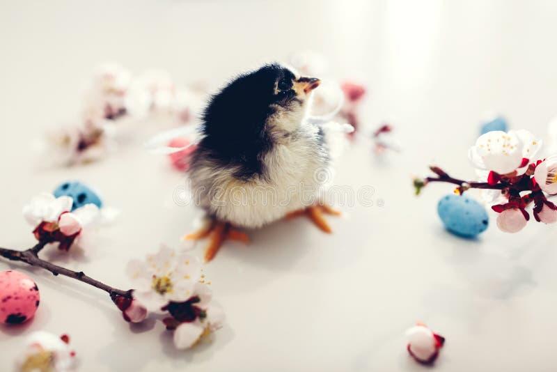 Wielkanocny kurczak Ma?y ? zdjęcie stock