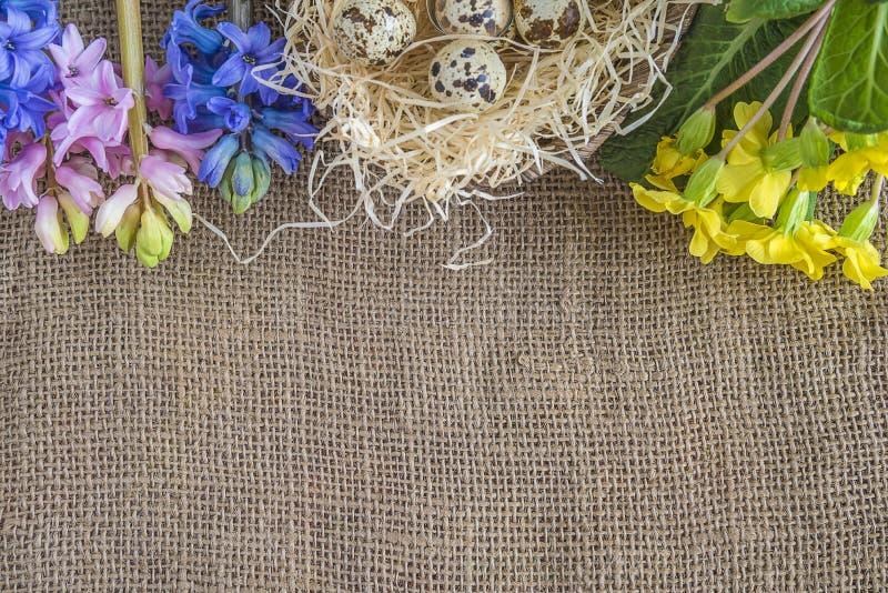 Wielkanocny tło z wiosna kwiatami i gniazdeczko z przepiórek jajkami zdjęcie royalty free