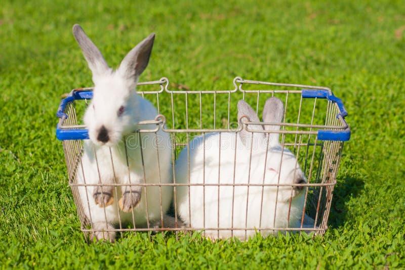 Wielkanocny zakupy Dwa biel obraz royalty free