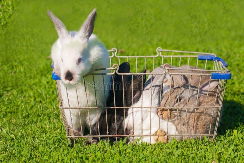 Wielkanocny zakupy Dwa biel fotografia royalty free