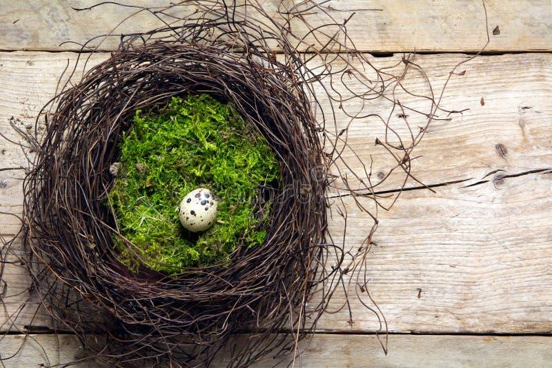Wielkanocy gniazdeczko gałązki i mech z osamotnionym przepiórki jajkiem na wieśniaku fotografia stock