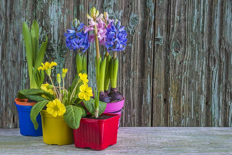 Wielkanocy lub wiosny skład obrazy stock