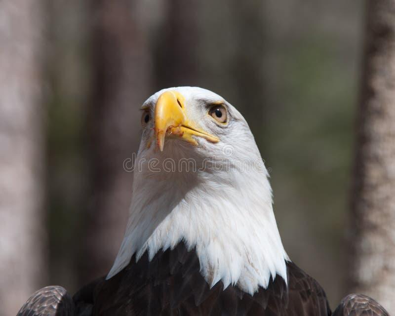 Wielki Amerykański symbol fotografia royalty free