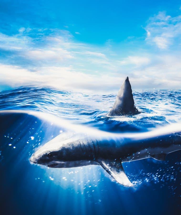 Wielki białego rekinu pływać podwodny royalty ilustracja