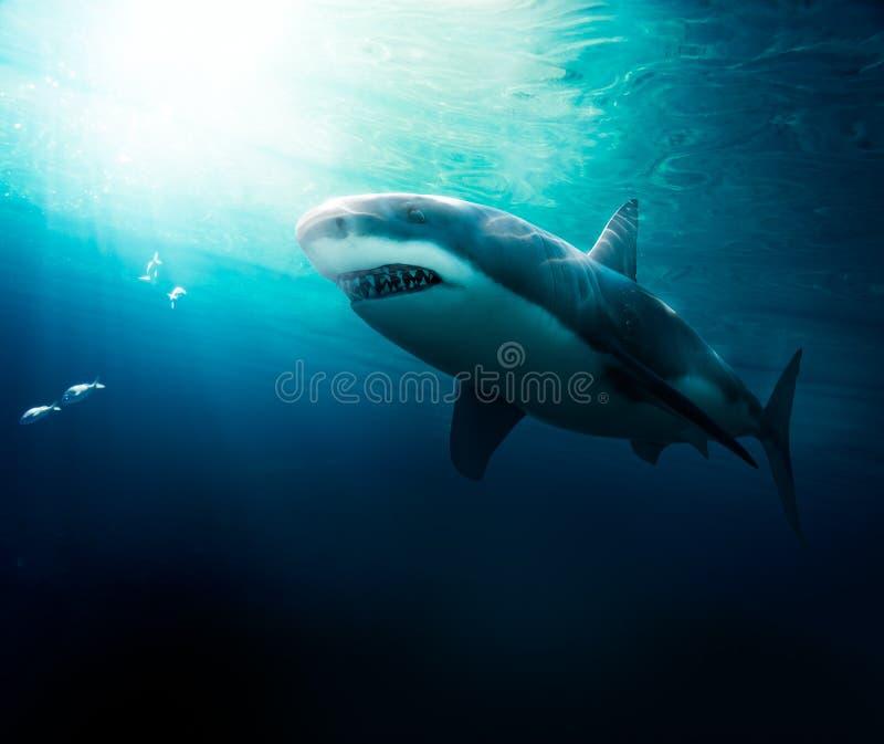 Wielki białego rekinu pływać podwodny ilustracji