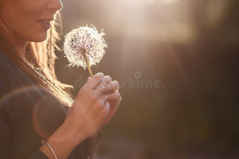Wielki biały dandelion w żeńskich rękach zdjęcia stock