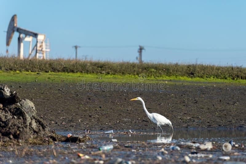 Wielki biały egret, zanieczyszczenia i odwiert naftowy pumpjack, fotografia royalty free