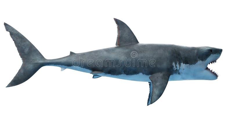 Wielki biały rekin royalty ilustracja