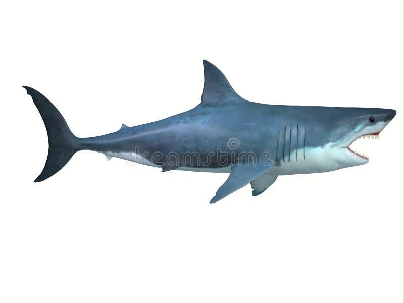 Wielki biały rekin strony profil zdjęcie stock