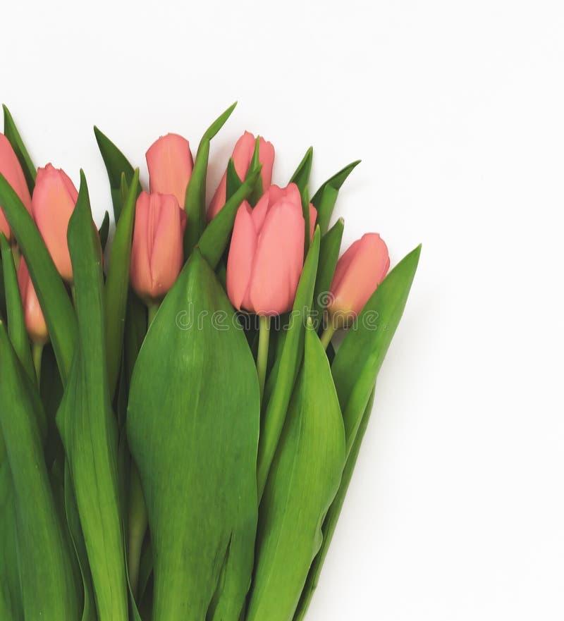 Wielki bukiet świezi różowi tulipany, odizolowywający na białym tle zdjęcie stock