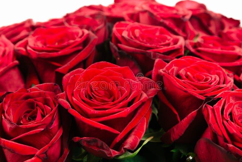 wielki bukiet odizolowywający na bielu czerwieni róża obraz stock