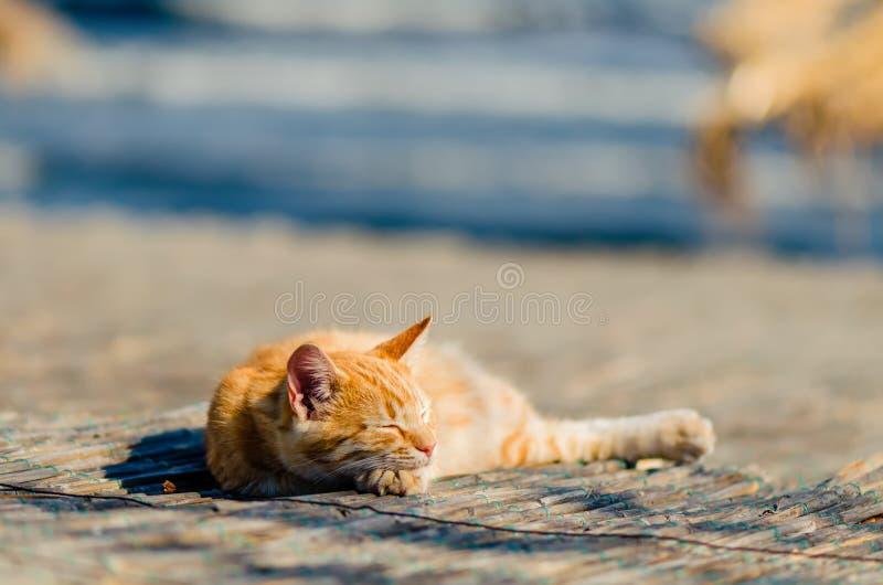 Wielki czerwony kot śpi, kłamający na trzcinowej macie, pod światłem th obrazy stock