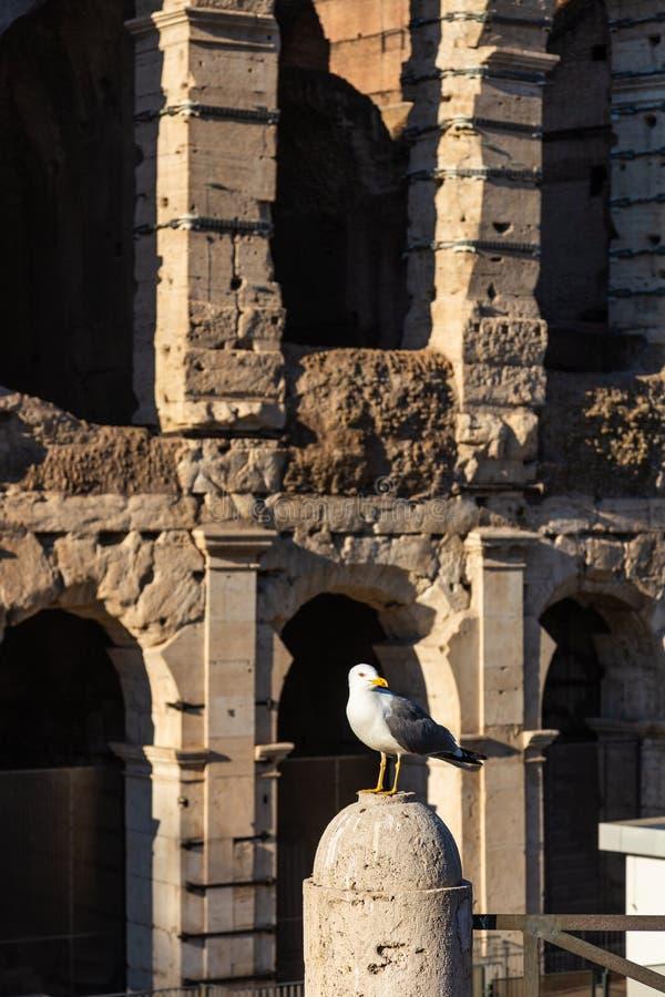 Wielki denny frajer siedzi na parapet przeciw t?u przyci?gania w Rzym, W?ochy obraz royalty free