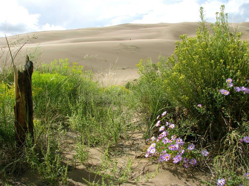 wielki diuna piasek zdjęcie stock