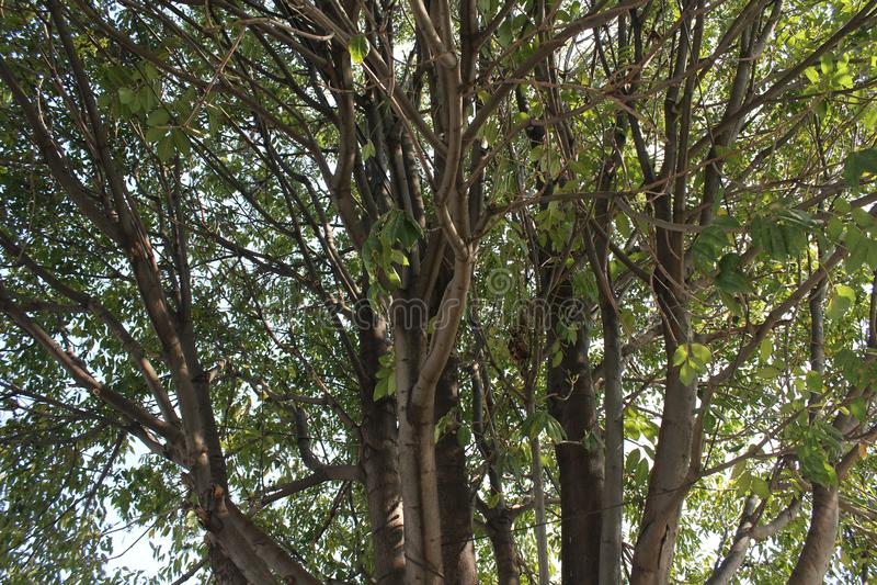 Wielki drzewo w lesie zdjęcia stock