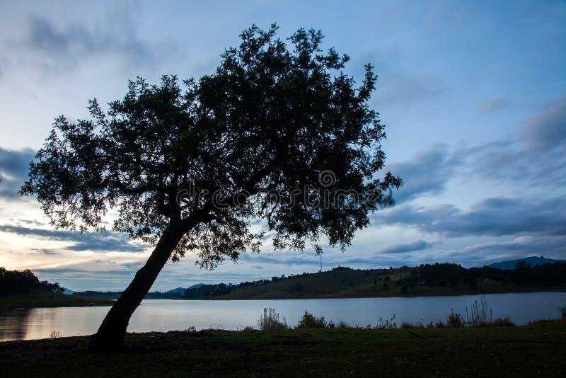 Wielki drzewo w wsi polu z jezioro wodą przy eventide zdjęcia royalty free