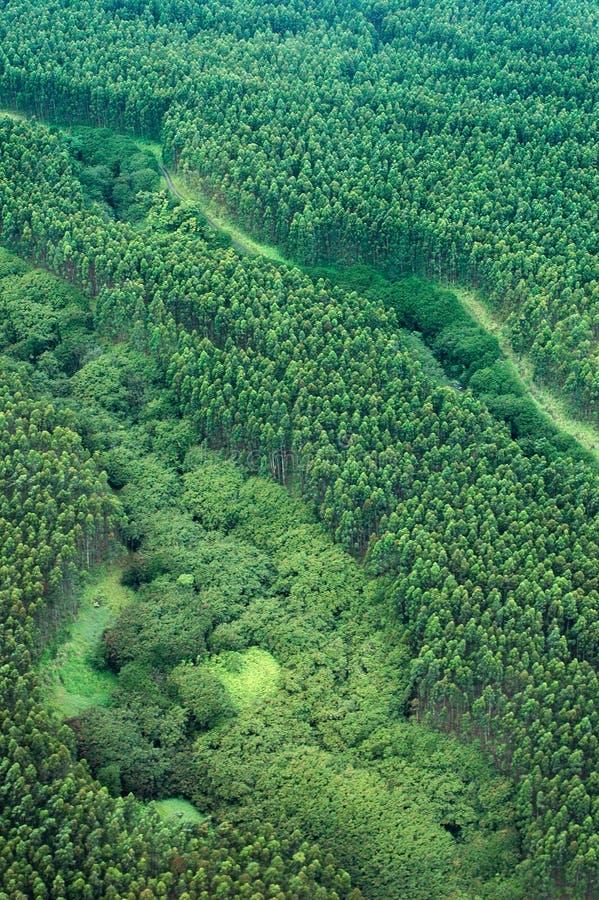 wielki eukaliptusowy lotniczego wyspy puszczy deszcz strzał obrazy royalty free