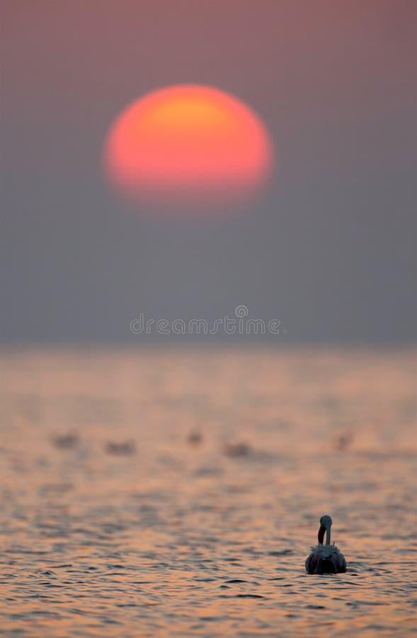 Wielki flaming i ranku słońce zdjęcie stock