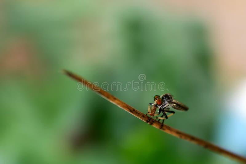 Wielki insekt je małych insekty w ogródzie obraz royalty free