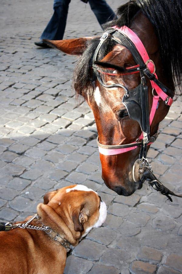 wielki koń miłe spotkanie zdjęcia royalty free