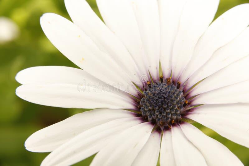 Wielki kwiatu planu życzenie ja fotografia royalty free