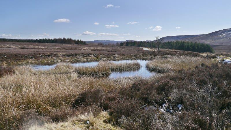 Wielki moorland widok wliczając basenu woda zdjęcia royalty free