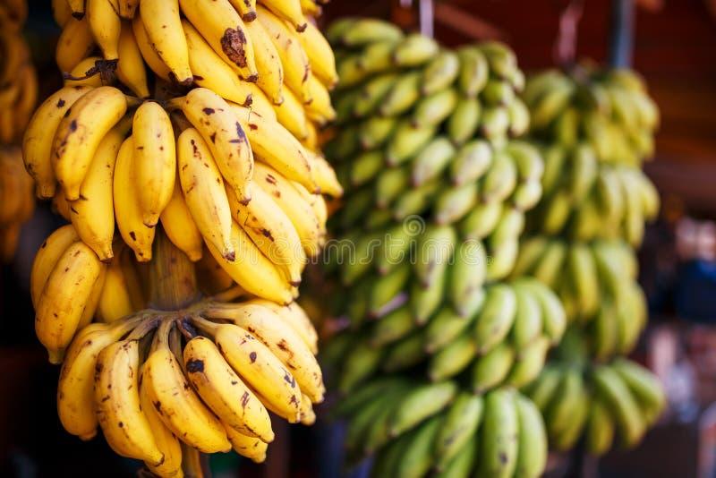 Wielki plik koloru żółtego i zieleni banany na gałąź w pliku, wiesza na wprowadzać na rynek kram obrazy stock