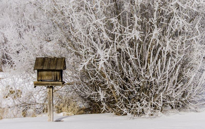 Wielki ptasi dozownik w zimie fotografia royalty free