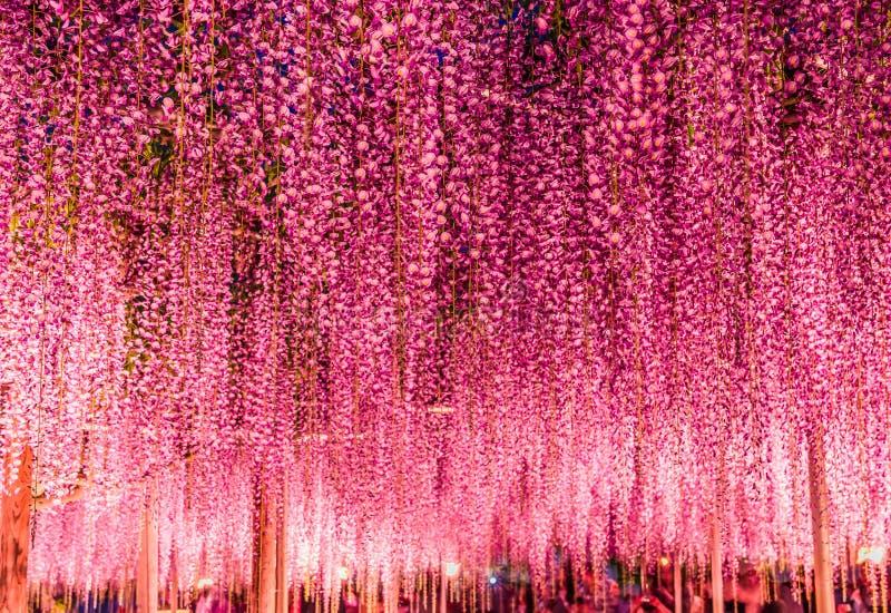 Wielki purpurowy żałości trellis przy nocą przy Ashikaga kwiatu parkiem, Tochigi, Japonia, Azja obrazy royalty free
