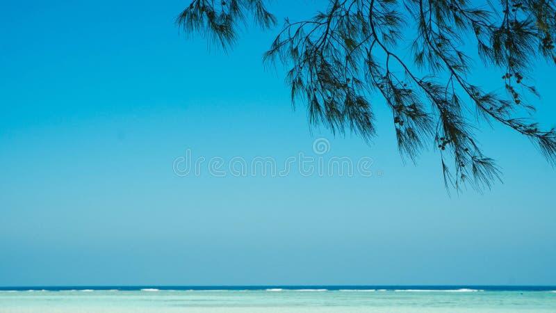 Wielki relaksujący denny widok od plaży z drzewną liścia cienia jatą fotografia stock