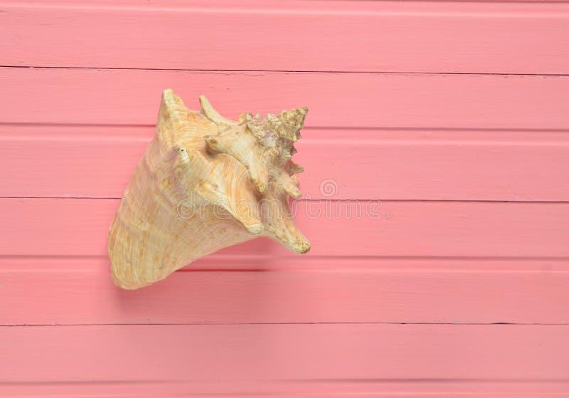 Wielki seashell na różowym drewnianym tle Odgórny widok obraz royalty free