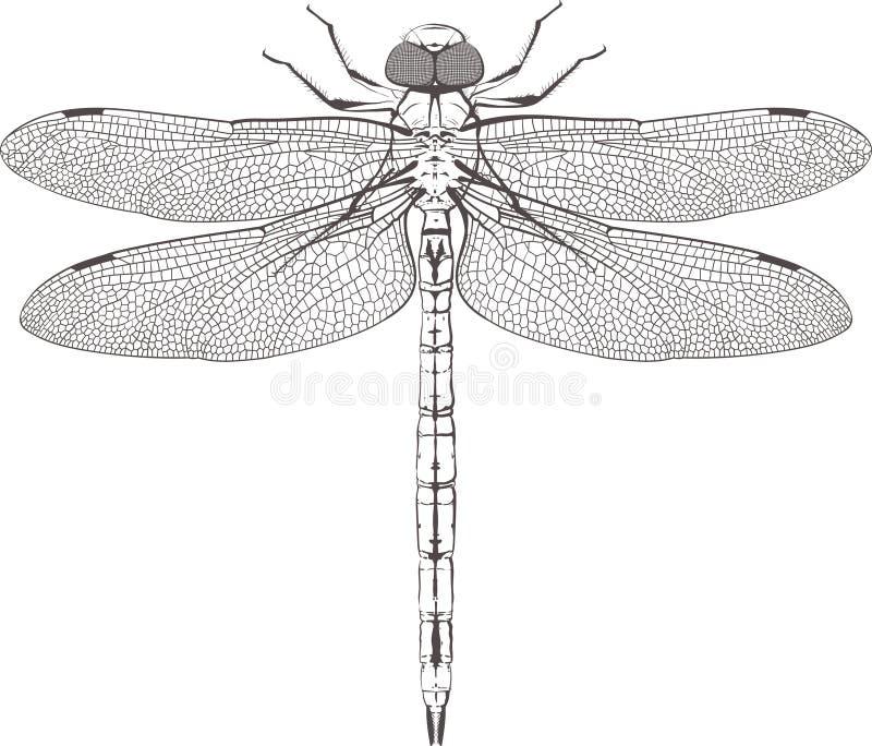 Wielki symetryczny dragonfly obraz royalty free